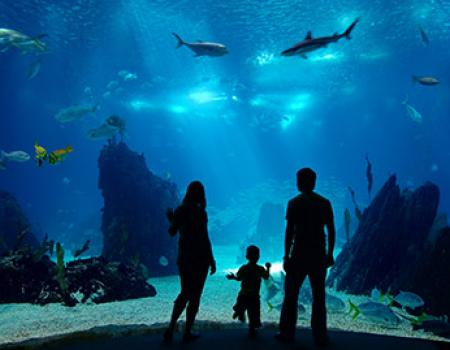 Family standing in front of an aquarium