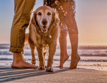 Dog on the beach in Oak Island
