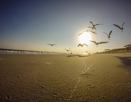 Birds taking off from the beach in Oak Island, NC