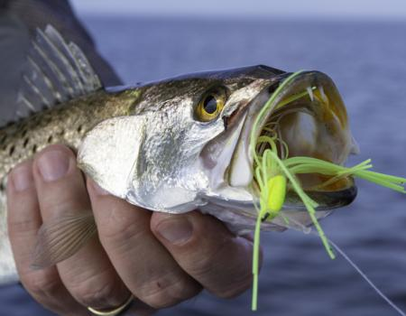 speckled trout fishing nc, southport fishing report, whats in season in southport