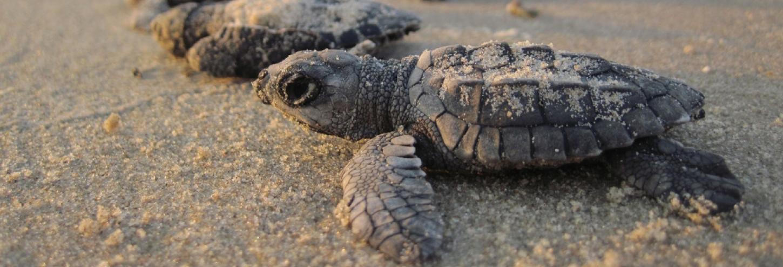 Turtle Talks in Oak Island NC