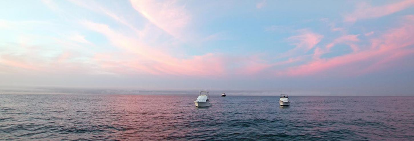Charter boats on the water with a pink sunset