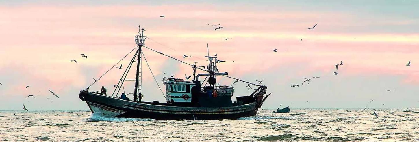 Fishing boat on the water surrounded by birds