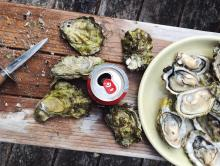 Fun Facts About Oysters