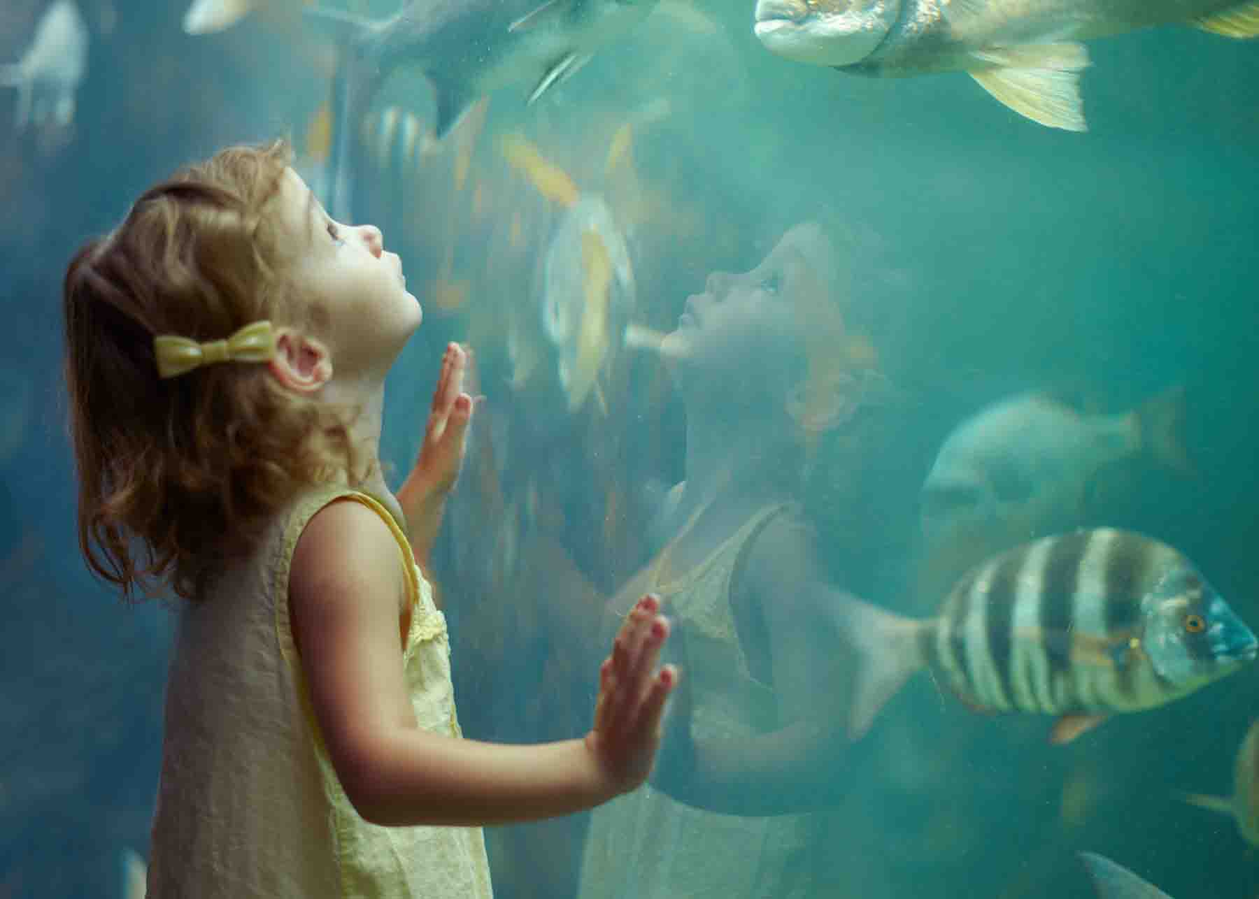 Little girl looking at a fish exhibit